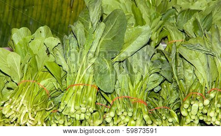 Fresh Green Vegetable