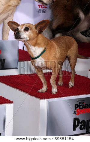 LOS ANGELES - FEB 14:  Papi at the Mr. Peabody honored with Pawprints in Cement at TCL Chinese Theater on February 14, 2014 in Los Angeles, CA