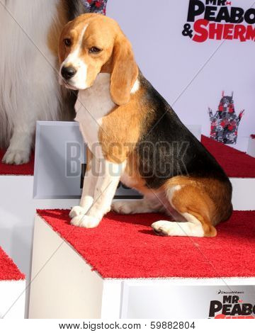 LOS ANGELES - FEB 14:  Shiloh at the Mr. Peabody honored with Pawprints in Cement at TCL Chinese Theater on February 14, 2014 in Los Angeles, CA