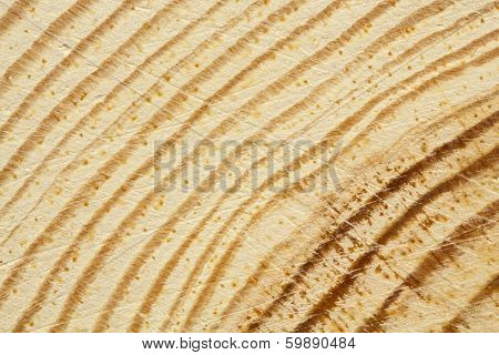 Closeup Of Pine Tree Texture With Scratches