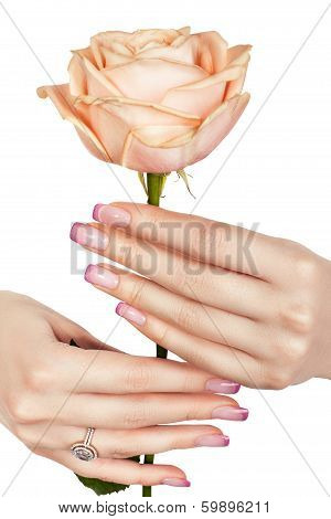 Beautiful Hand Holding A Rose.