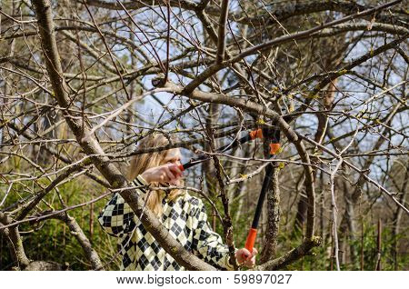 Woman Pruned Old Tree With Shears In Early Spring