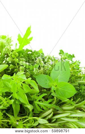 Border of Different  Fresh Spice Herbs  over white background / Basil, Chive, Majoram, Oregano, Parsley, Thyme, Rucola and Rosemary / vertical composition