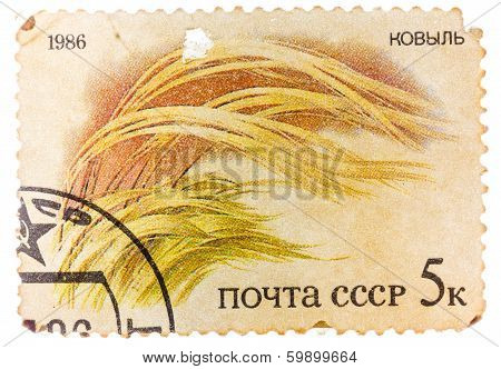 Post Stamp Printed In Ussr (cccp, Soviet Union) Shows Image Of Grass