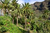 stock photo of canary-islands  - The small village La Calera in the Valle Gran Rey on the Canary Island La Gomera - JPG