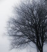 Leafless Tree In Fog