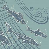 stock photo of fish pond  - Various kinds of fish escaping from poachers nets - JPG