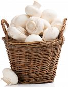 pic of edible mushrooms  - Fresh Portabello Mushroom champignon in basket isolated on white background - JPG