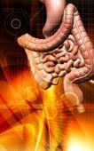 image of excretory  - Digital illustration of human digestive system  in colour background - JPG