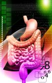 pic of excretory  - Digital illustration of human digestive system in  colour background - JPG