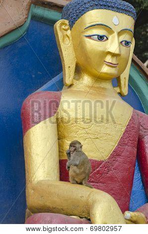 Buddha Statue And Wild Monkey In Kathmandu, Nepal