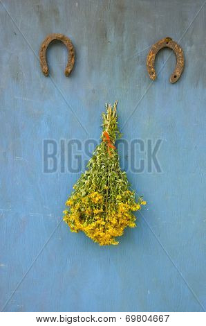 Big Bunch  Fresh  Flowers Hypericum St Johns Wort Ant Two Horseshoe