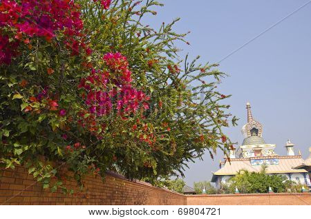 Beautiful Flowers And Buddhist Temple In Lumbini, Nepal