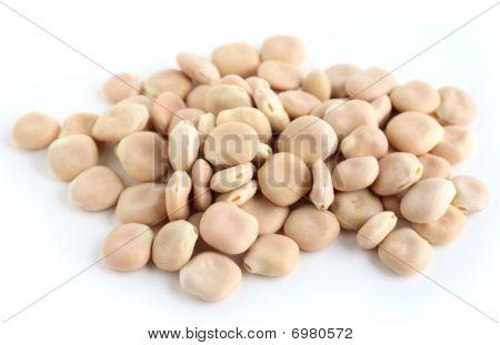 Thermos Beans On White