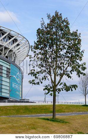 Stadium And Tree