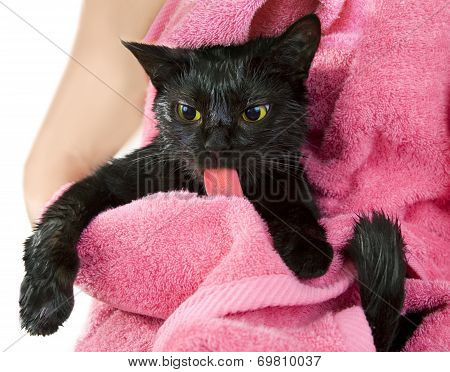 Cute Black Soggy Cat After A Bath Licking