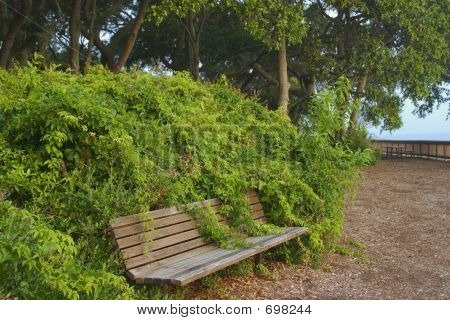 Vines On Bench