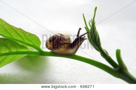 Snail Over White