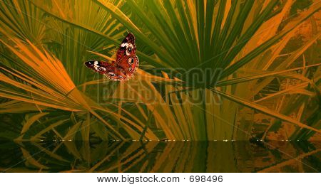 Butterfly, Water And Palms