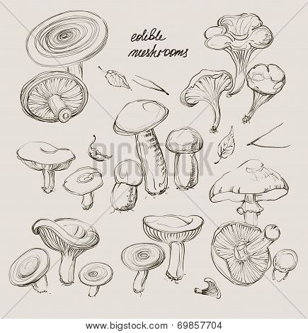 Vector Hand Drawing A Set Of Mushrooms