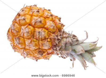 South African Baby Pineapple