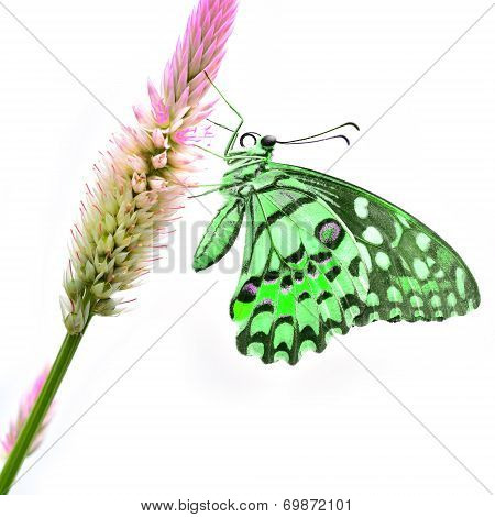Green Butterfly On Flower