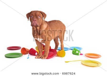 Dog In A Kitchen