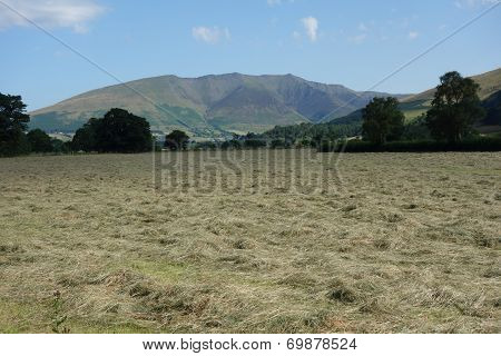 Hay Field and Blencathra