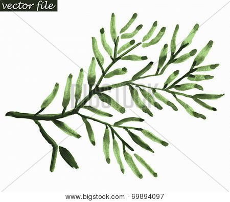 Branch of green olives. Abstract foliate watercolor paintings. Vector illustration.