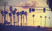 picture of light-pole  - Vintage sunset picture of palms and poles on street against sun - JPG