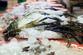 foto of tiger prawn  - Big fresh tiger prawns on sell in the market - JPG