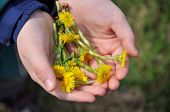 image of cowslip  - The first spring flowers in children - JPG