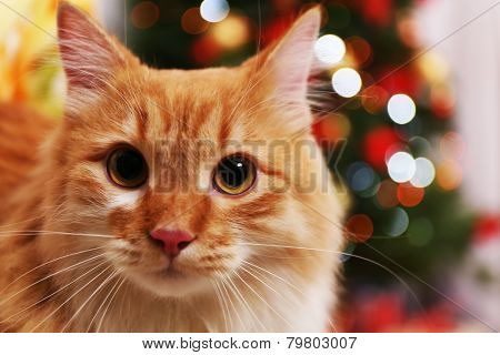 Lovable red cat on Christmas tree background