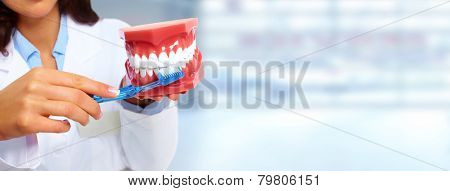 Dentist woman with teeth model. Dental health care clinic.