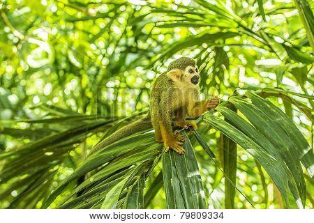 Spider Monkey Scene