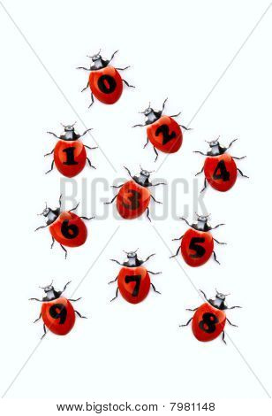 numerals from ladybirds