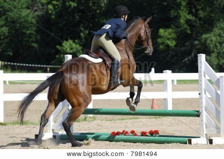 Horse Jumping #3