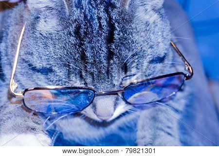 Cat In Eyeglasses