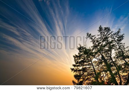 Red sunset and blue sky with tree branches at Baikal Lake Siberia