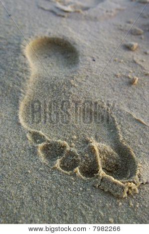 Footprint on river sand