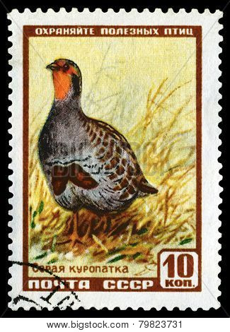 Vintage  Postage Stamp. Ptarmigan.