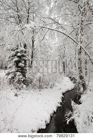 Wintry Creek In The Forest