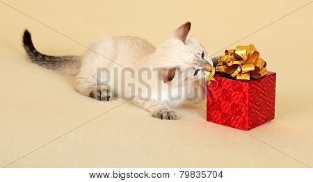Kitten with gift.