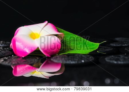 Spa Concept Of Plumeria Flower, Green Leaf Kalla With Drops On Zen Basalt Stones In Reflection Water