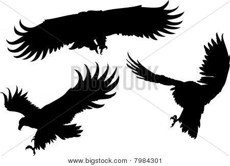 Eagles' silhouettes