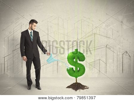 Business man poring water on dollar tree sign concept on city background