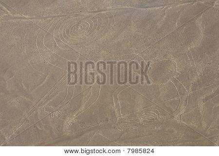 Monkey, Nazca