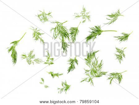Sprigs of dill isolated on white