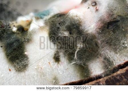 Mold, macro view