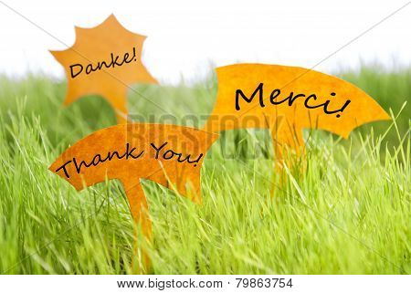 Three Labels With Thank You In Different Languages On Grass